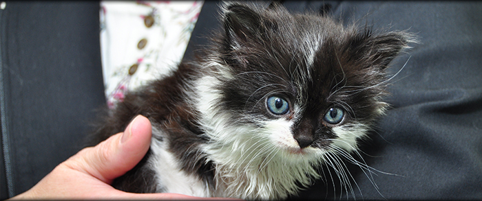 Kitten Care in Carson City NV, Dayton NV, Washoe Lake, Johnson Lane and surrounding towns