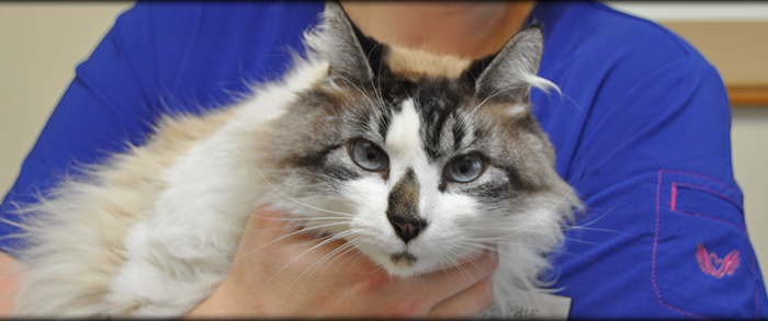 Senior cat veterinarian near Carson City NV, Dayton NV, Washoe Lake, Johnson Lane and surrounding towns