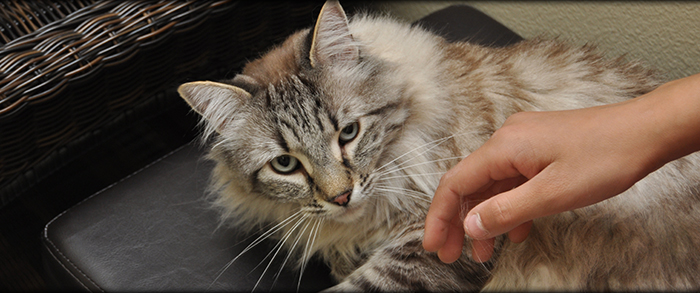 Timberline Animal Hospital in Carson City NV